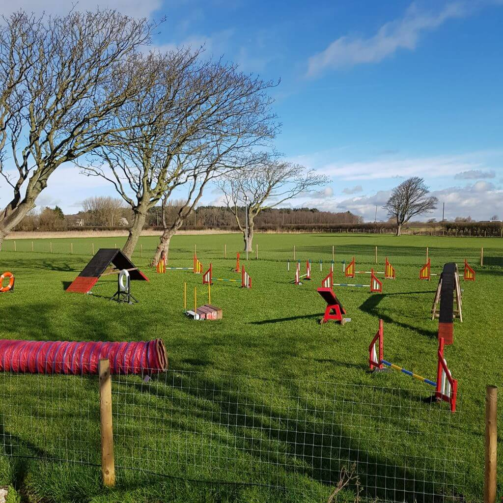 outdoor agility training for dogs, Canine Training in Merseyside