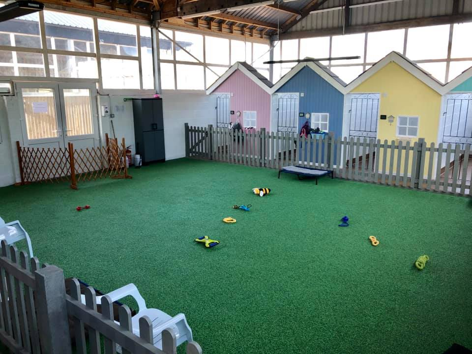 Day Care facilities with toys and privacy rooms for dogs